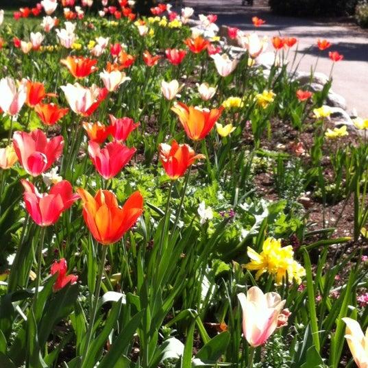 3/24/2013 tarihinde Robin M.ziyaretçi tarafından Descanso Gardens'de çekilen fotoğraf