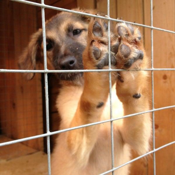 ставропольский приют для животных фото после