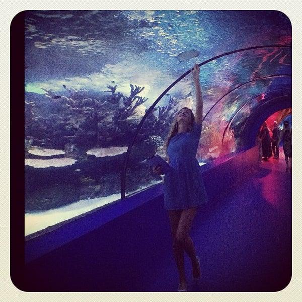 Das Foto wurde bei Antalya Aquarium von Anna Y. am 9/16/2012 aufgenommen