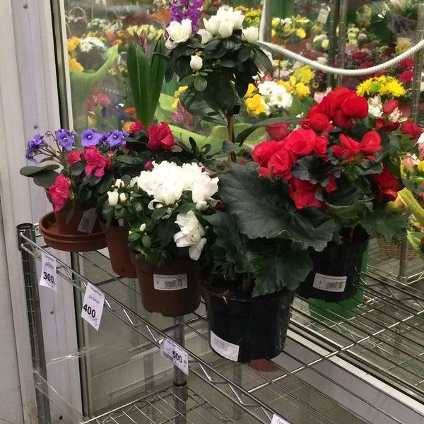 Цветы магазин спб 24 часа, кирпич