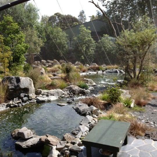 12/1/2012 tarihinde Ronald B.ziyaretçi tarafından Auckland Zoo'de çekilen fotoğraf