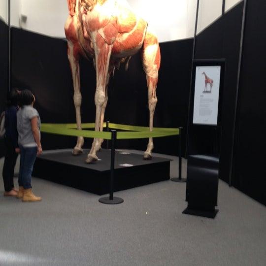 รูปภาพถ่ายที่ Universum, Museo de las Ciencias โดย Fernando P. เมื่อ 10/7/2012