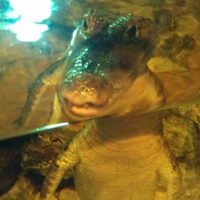 10/22/2012에 Nikki M.님이 SEA LIFE Minnesota Aquarium에서 찍은 사진