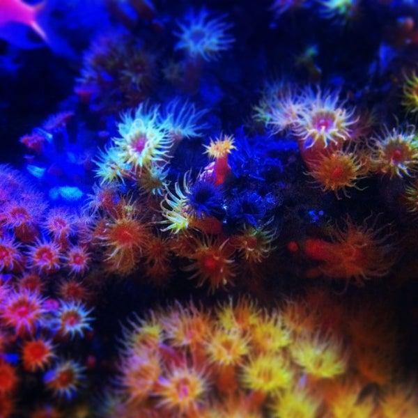 Das Foto wurde bei Aquarium of the Pacific von Laura G. am 2/28/2013 aufgenommen