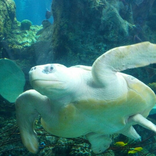 Das Foto wurde bei Aquarium of the Pacific von Liviu F. am 3/31/2013 aufgenommen