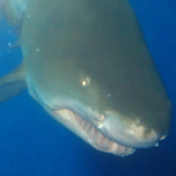 7/21/2013 tarihinde Mallory F.ziyaretçi tarafından Texas State Aquarium'de çekilen fotoğraf