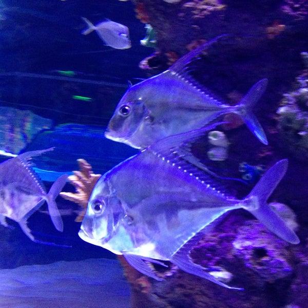 Das Foto wurde bei Antalya Aquarium von Serdar A. am 5/6/2013 aufgenommen