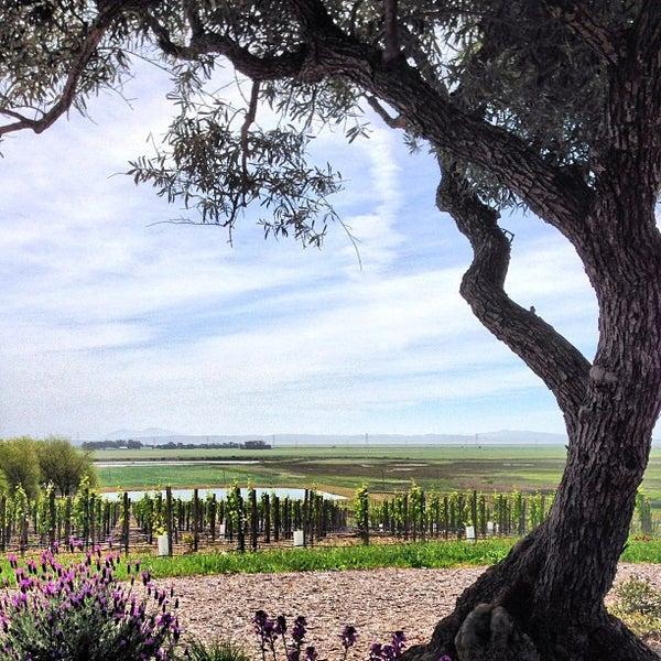 รูปภาพถ่ายที่ Ram's Gate Winery โดย Marshall B. เมื่อ 4/13/2013
