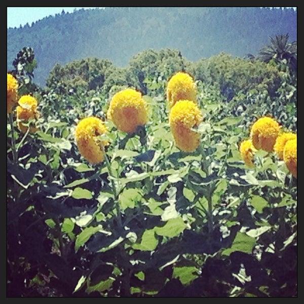 Photo prise au Peju Province Winery par Mindy J. le7/18/2013