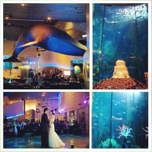 Das Foto wurde bei Aquarium of the Pacific von Jeffrey L. am 6/30/2013 aufgenommen