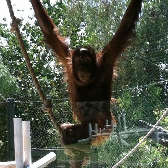 Снимок сделан в Phoenix Zoo пользователем Ernie V. 5/19/2012