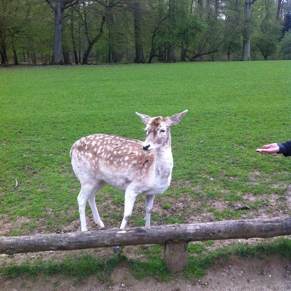 Wildpark grafenberg
