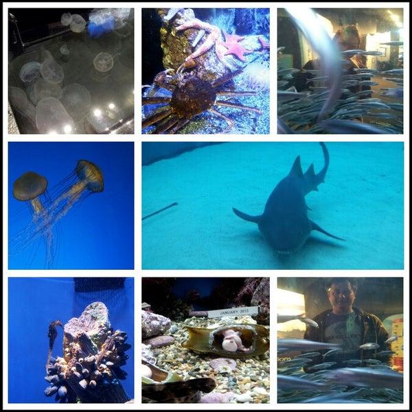 Photo prise au Aquarium of the Pacific par KiM P. le11/12/2012