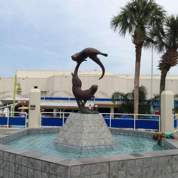 6/14/2013にKatieがTexas State Aquariumで撮った写真