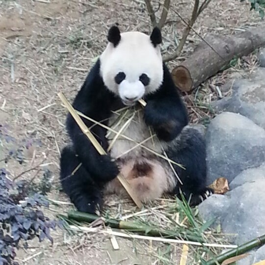 Foto diambil di Singapore Zoo oleh Kerem A. pada 1/8/2013