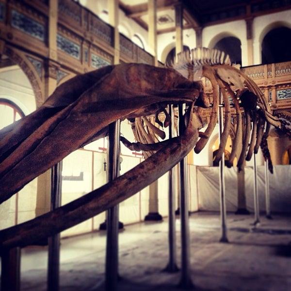 7/19/2013にMauricio G.がMuseo Nacional de Historia Naturalで撮った写真