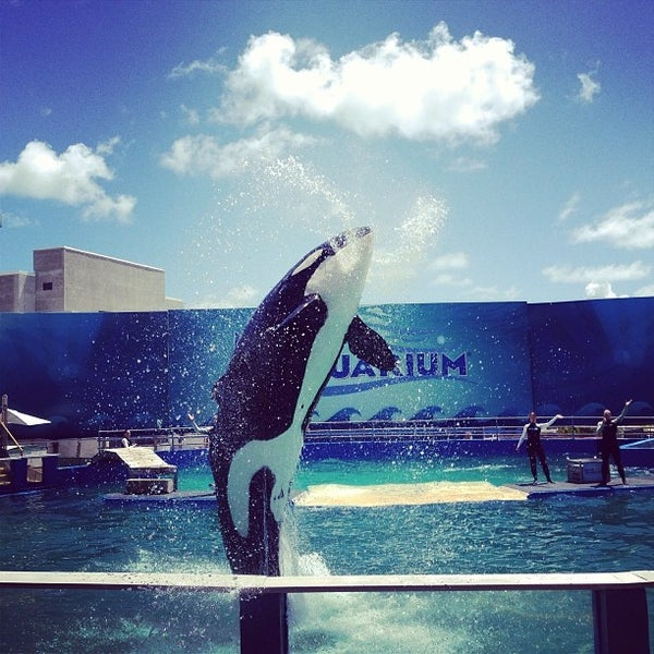 Снимок сделан в Miami Seaquarium пользователем Cesar Y. 9/10/2013