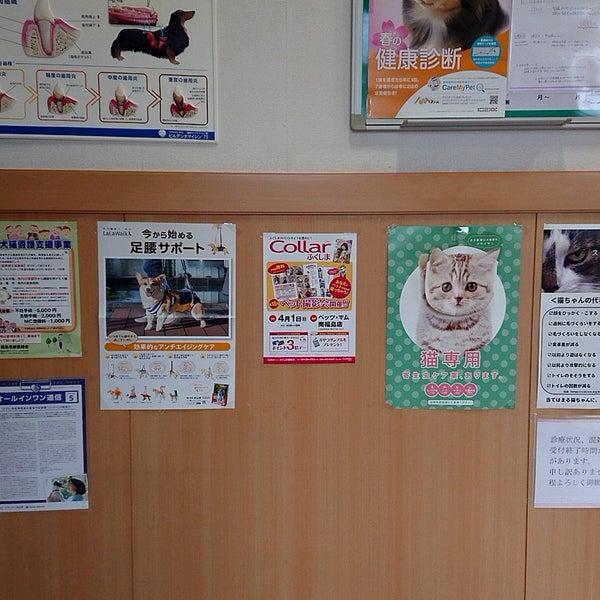 福島市 動物病院