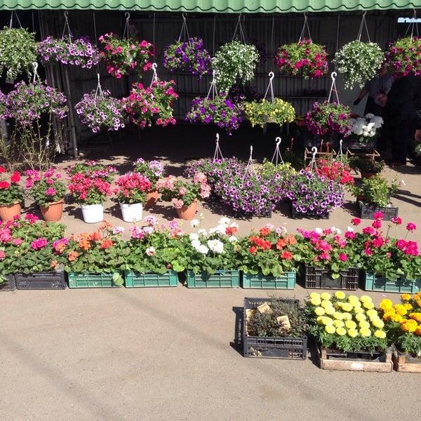 Срезанные, обзор оптовый рынок цветов ростов черевичкина