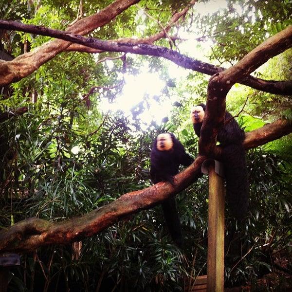 Foto diambil di Singapore Zoo oleh Maggie W. pada 2/15/2013