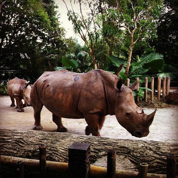 Foto tirada no(a) Singapore Zoo por Maggie W. em 2/15/2013