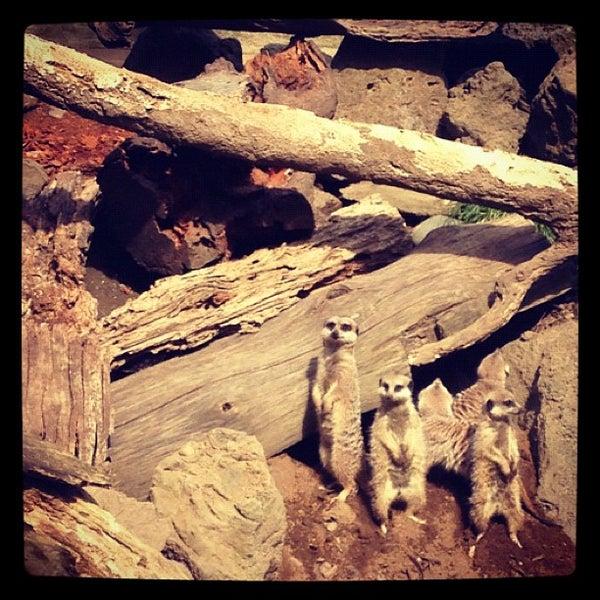 10/25/2012 tarihinde Dan W.ziyaretçi tarafından Auckland Zoo'de çekilen fotoğraf