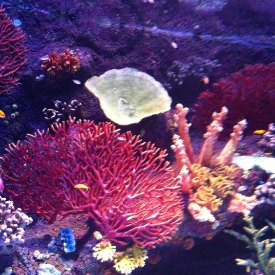 Das Foto wurde bei Antalya Aquarium von М Г. am 10/21/2012 aufgenommen