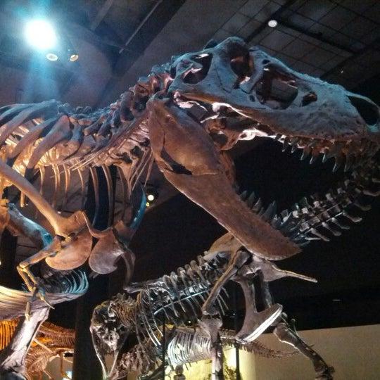 Foto scattata a Houston Museum of Natural Science da Corey S. il 10/13/2012