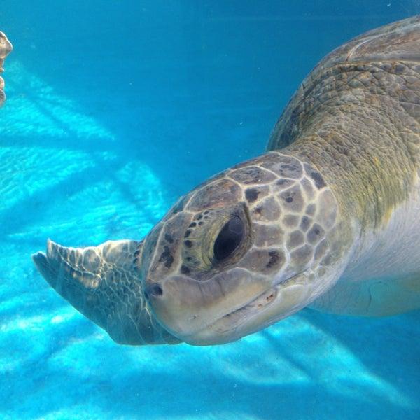 7/13/2013 tarihinde Aristofanes M.ziyaretçi tarafından Texas State Aquarium'de çekilen fotoğraf