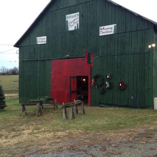 Photos at Kovalic's Christmas Tree Farm