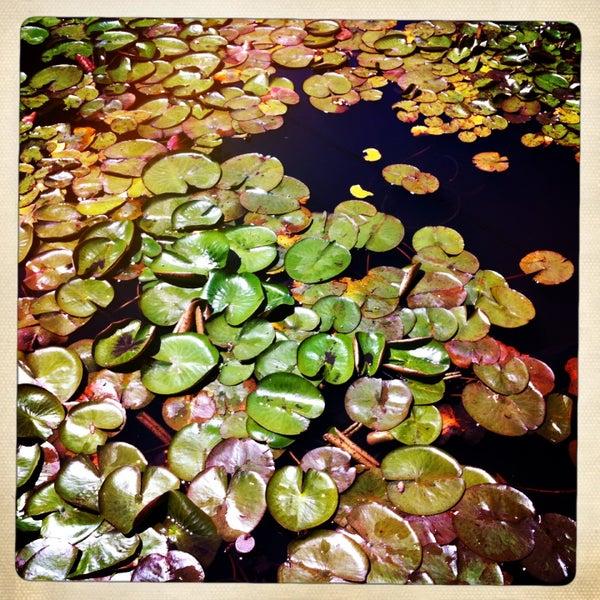 4/29/2013 tarihinde Baby S.ziyaretçi tarafından Descanso Gardens'de çekilen fotoğraf