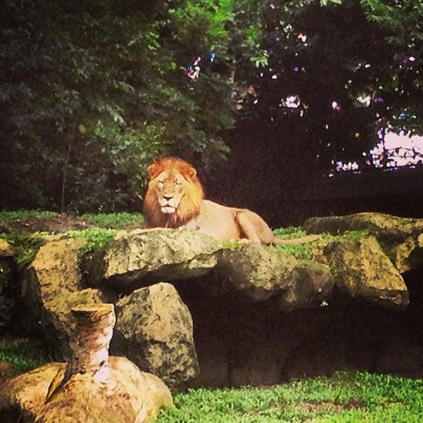 Foto scattata a Singapore Zoo da Nazmi H. il 12/22/2012