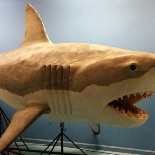 Foto tirada no(a) Las Vegas Natural History Museum por carla R. em 5/9/2015