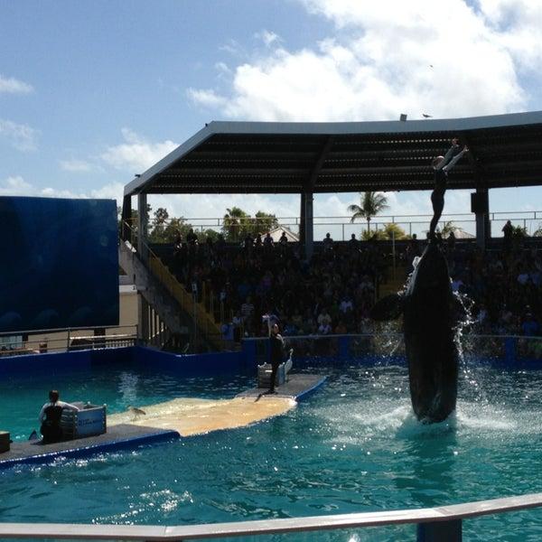 Снимок сделан в Miami Seaquarium пользователем Miguel G. 2/22/2013