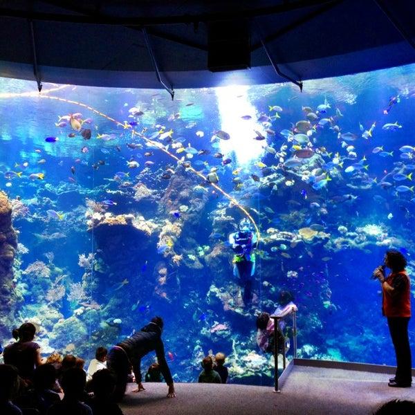รูปภาพถ่ายที่ California Academy of Sciences โดย Eric W. เมื่อ 2/14/2013