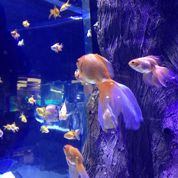 Das Foto wurde bei Antalya Aquarium von Hakan am 5/14/2013 aufgenommen