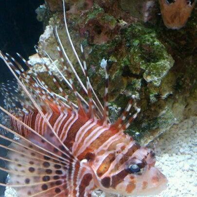 Das Foto wurde bei Aquarium of the Pacific von Nigel C. am 10/27/2012 aufgenommen