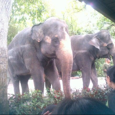 Foto diambil di Singapore Zoo oleh Lya A. pada 11/5/2012