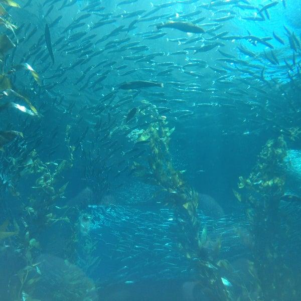 รูปภาพถ่ายที่ California Science Center โดย Dan B. เมื่อ 9/1/2013