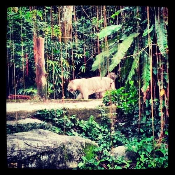Foto tirada no(a) Singapore Zoo por Genrih B. em 2/20/2013
