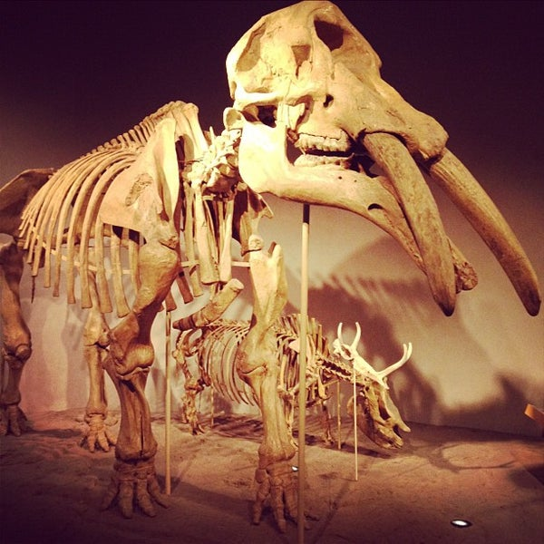 Photo prise au Denver Museum of Nature and Science par Colorado C. le10/15/2012