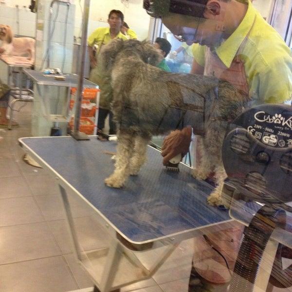 Photos at Cub 'N' Kit - Pet Service in Penjaringan