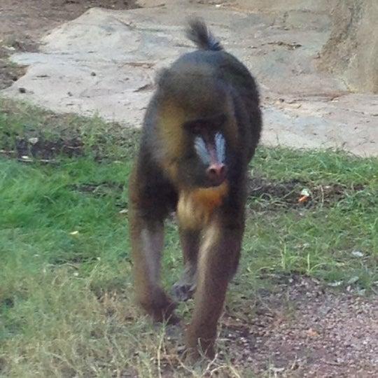 Снимок сделан в Phoenix Zoo пользователем RenyaDeDulce 10/29/2012