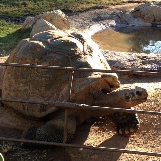 Foto tomada en Phoenix Zoo por RenyaDeDulce el 10/29/2012