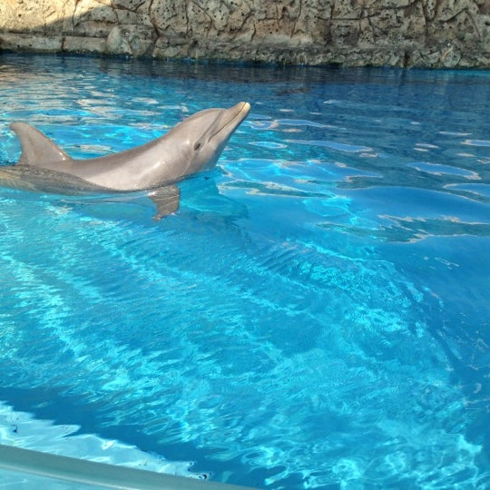 6/10/2012にCharles B.がTexas State Aquariumで撮った写真