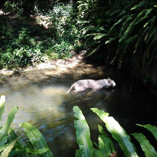 Foto tirada no(a) Singapore Zoo por Ajeng A. em 12/5/2012