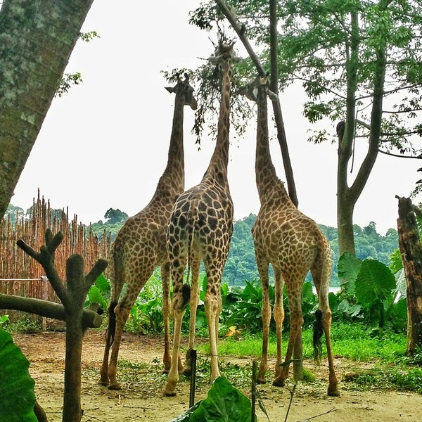 Foto tirada no(a) Singapore Zoo por Lorie em 5/18/2013
