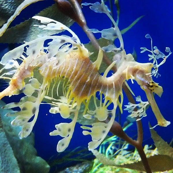 Das Foto wurde bei Aquarium of the Pacific von Shelya J. am 3/3/2013 aufgenommen