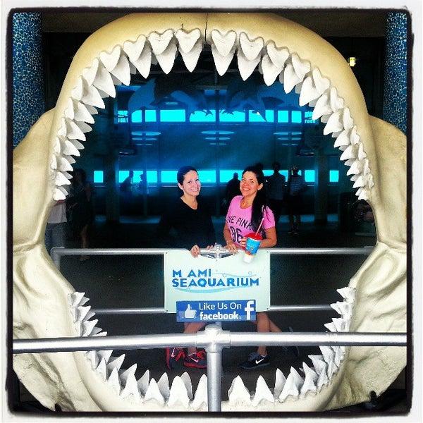 Снимок сделан в Miami Seaquarium пользователем Yvonne M. 4/4/2013