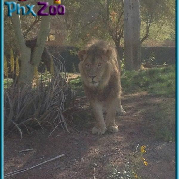 Foto tomada en Phoenix Zoo por Michael B. el 3/24/2013
